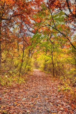 Autumn Trail sm