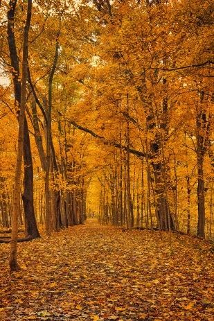 Autumn Walk Through Woods sm