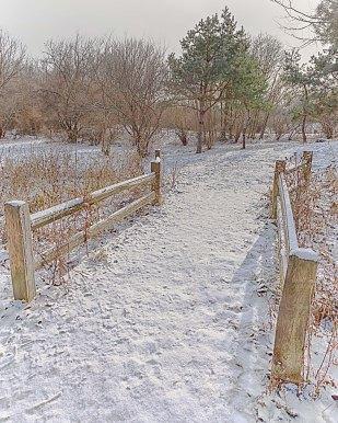Back Woods Trail