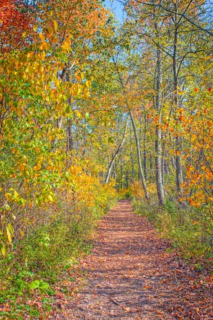 Bailly Trail in Autumn