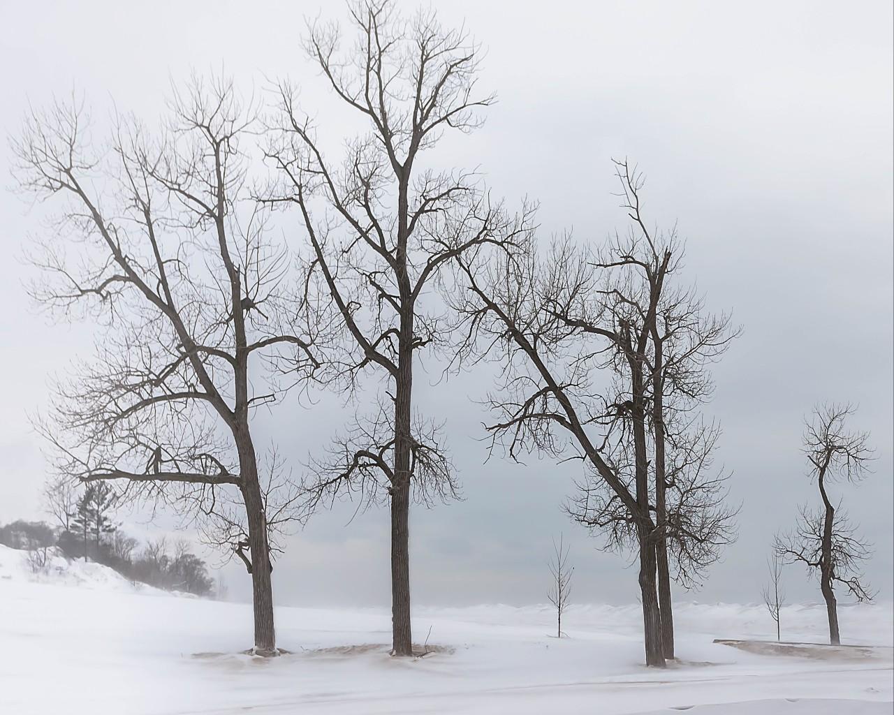 Beach Trees in Winter