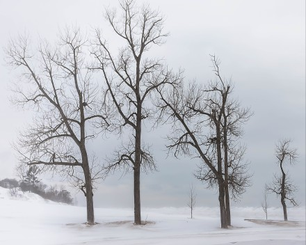 Beach Trees in Winter