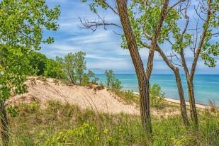 Beach Through Trees