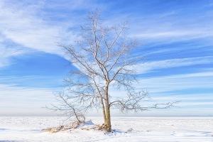 Beach Tree Beside Frozen Lake