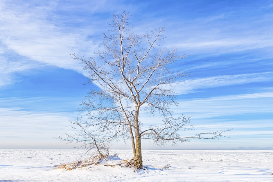 Beach Tree Beside Frozen Lake