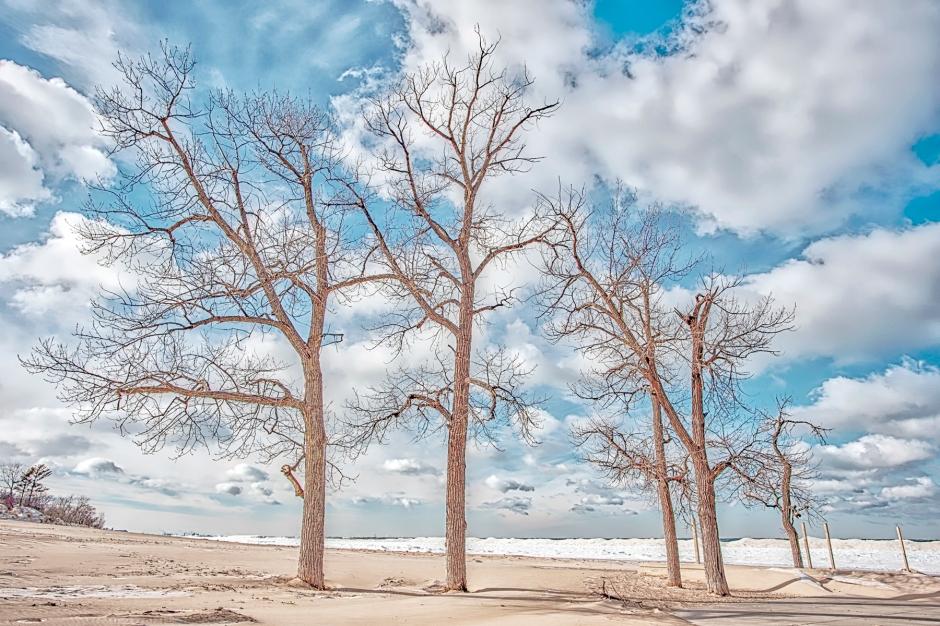 Beach Trees and Shelf Ice in Winter Light