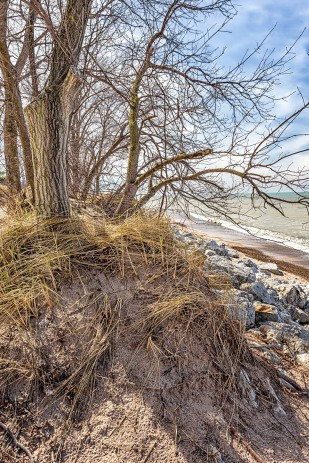 Beach Trees in Early April