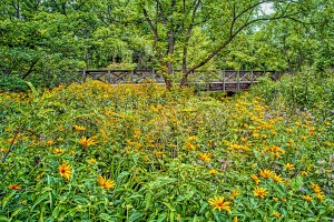 Bridge Amidst Wildflowers