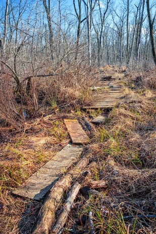 Broken Marsh Trail in Winter