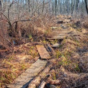 Broken Marsh Trail in Winter