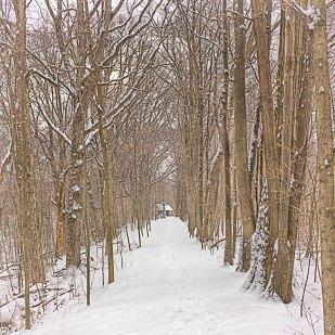 Cabin Path