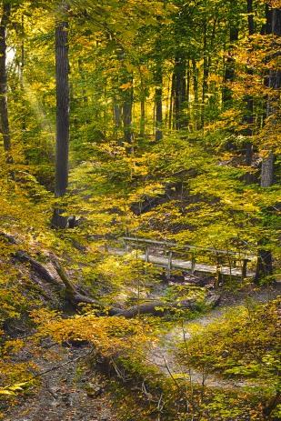 Chellberg Trail Bridge in Autumn sm