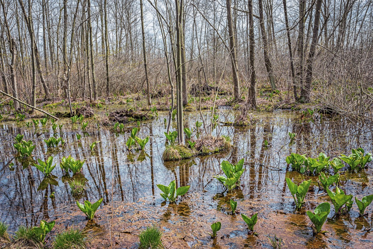 Cowles Bog in Early April