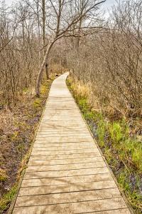 Cowles Bog Walkway