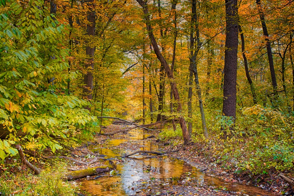 Creek After Autumn Wind Storm