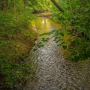 Creek After Rain