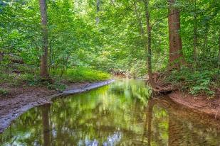 Creek in July