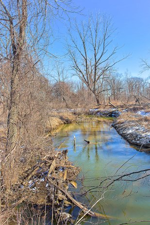 Creek in Mid-March