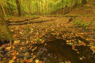Creek Under Autumn Leaves