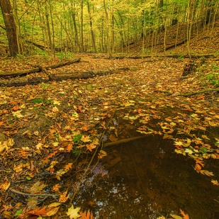Creek Under Autumn Leaves