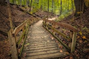 Dark Forest Trail