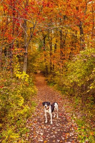 Dog Trail Eight sm