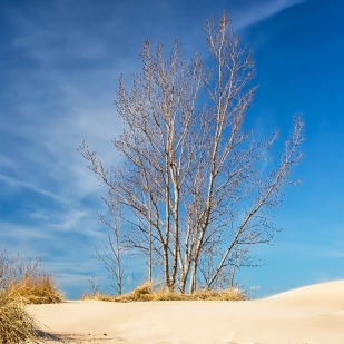 Dune Ridge in March Sunlight