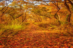 Dune Woods Trail in November