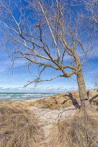 Dune Ridge Tree