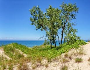 Dune Ridge Trees