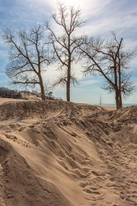 Dune Trees at Easter Weekend