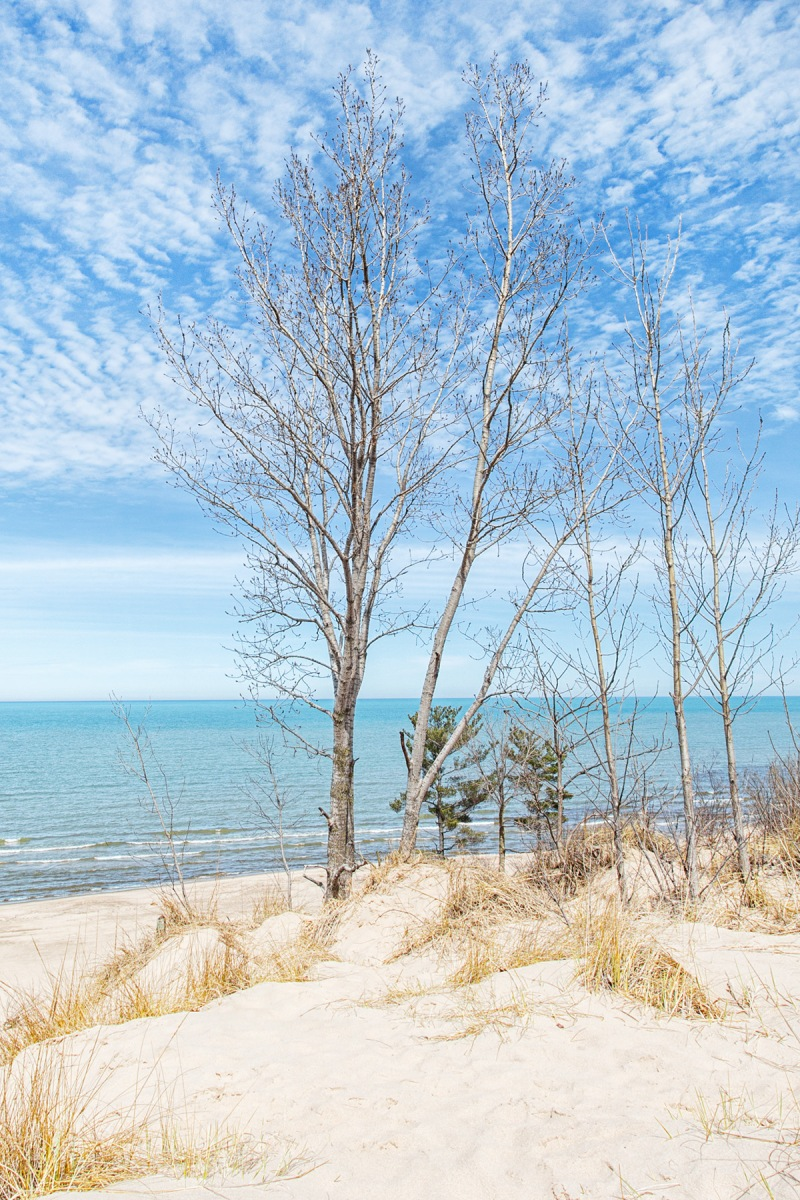 Dune Trees at Start of April