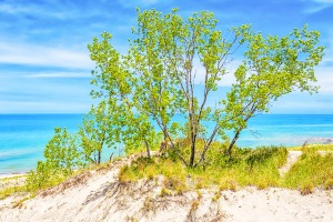 Dune Trees on Ridge Above Lake Michigan