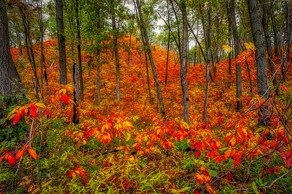 Fall Foliage Fills Dune Hill