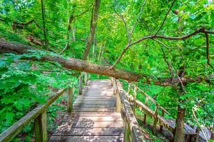Fallen Tree on Footbridge