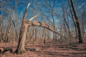 Fresh Fallen Tree