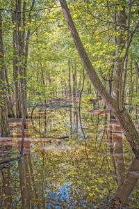 Flooded Forest After October Rain