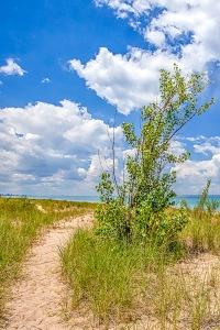 Foredune Trail