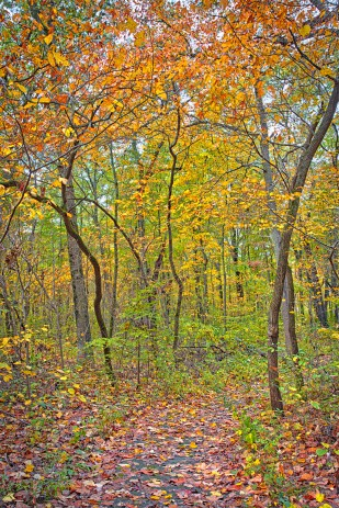 Glenwood Dunes Trail in Autumn