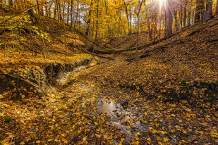 Gorge Trail at Start of December