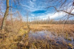 Great Marsh in Late Autumn