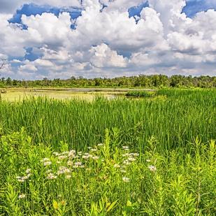 Great Marsh in June