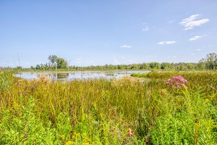 Great Marsh in Late August