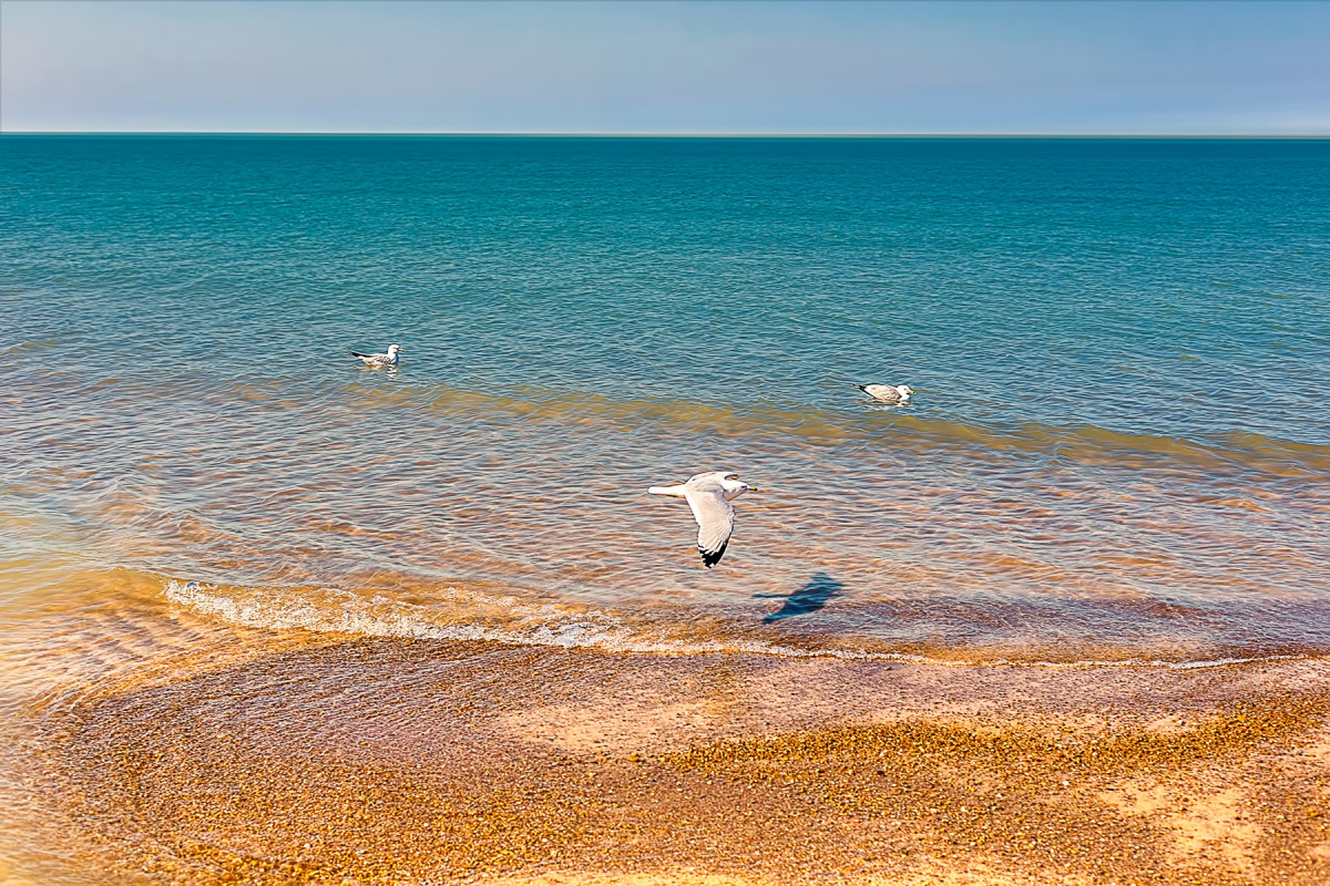 Gulls Along Shore in Early Spring