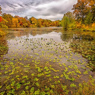 Inlet in Autumn