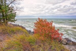 Lake Edge in Early November