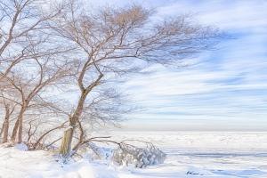 Lake View Tree in Freezing Wind