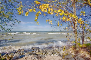 Lake Waves Seen Beneath Autumn Leaves