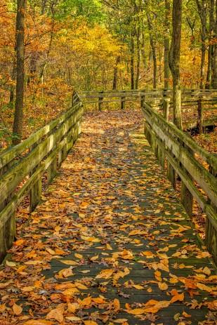 Leaf Fall After Rain