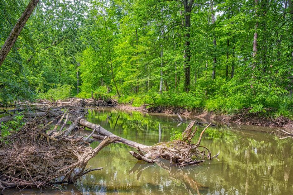 Little Calumet River in Early June